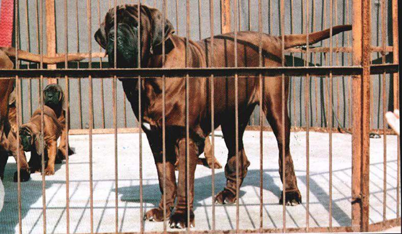 Dog Breeder Kennels